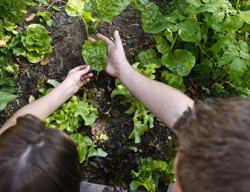 Les verts durent for Site jardinage